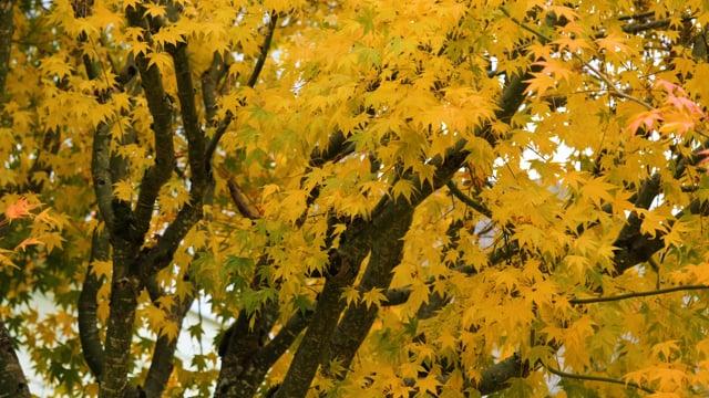 Last Days of Fall - 1