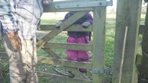 Watch Climbing the gate