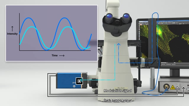 Frequency Domain Fluorescence Lifetime Imaging with pco.flim (FD-FLIM)