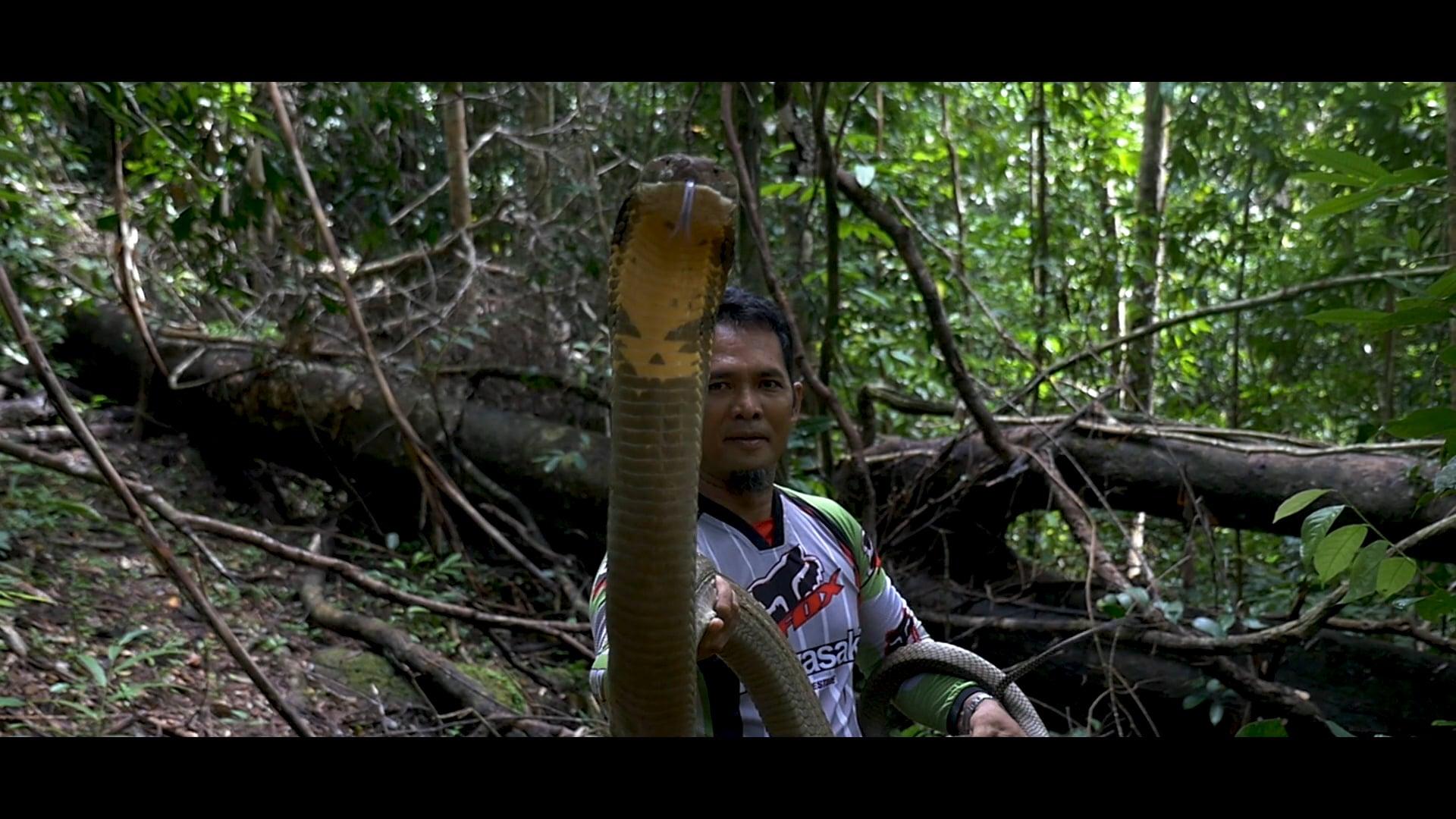 "Trailer ""The Malaysian Snake Guardian"""