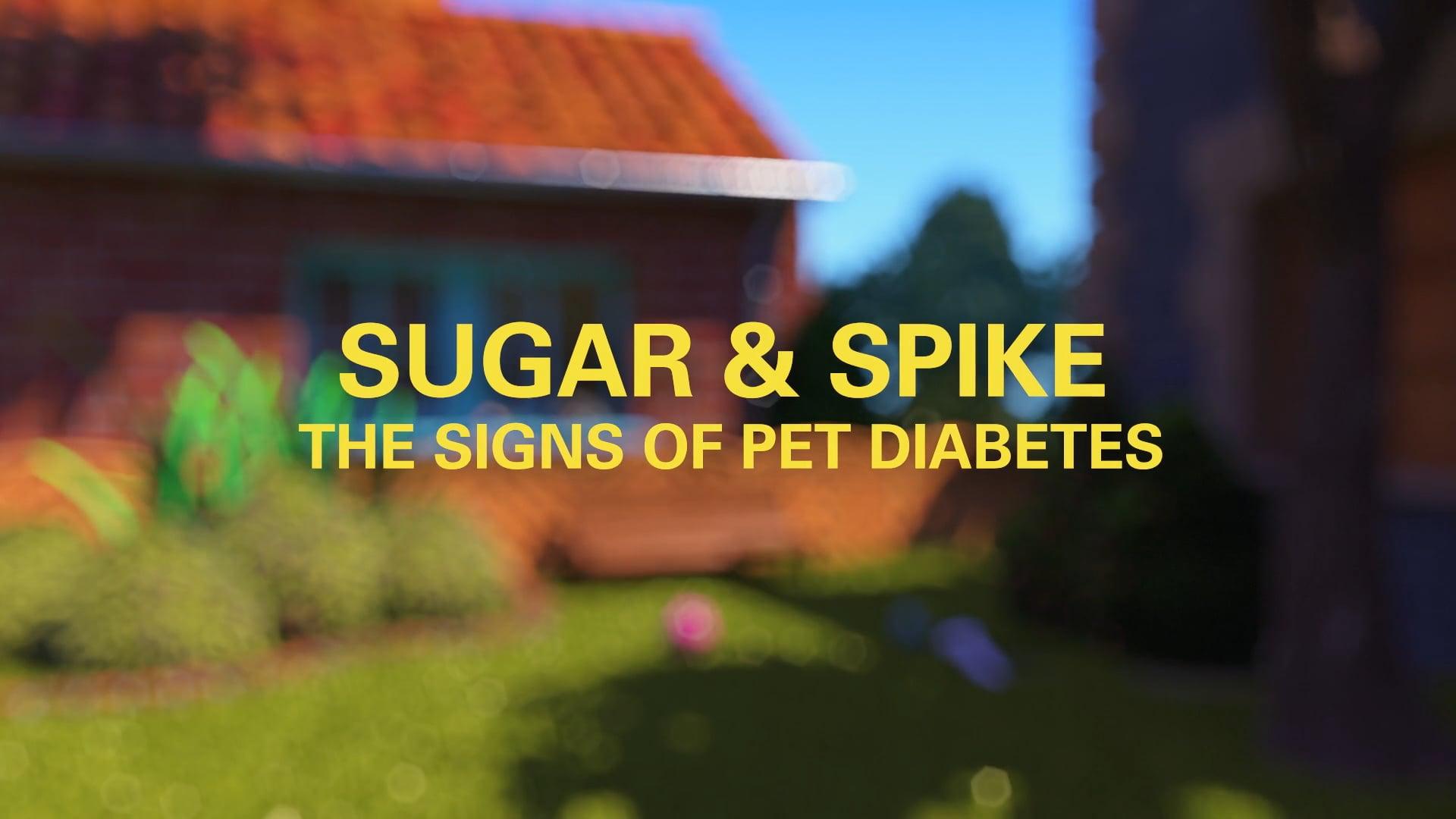 Sugar & Spike - The signs of pet diabetes