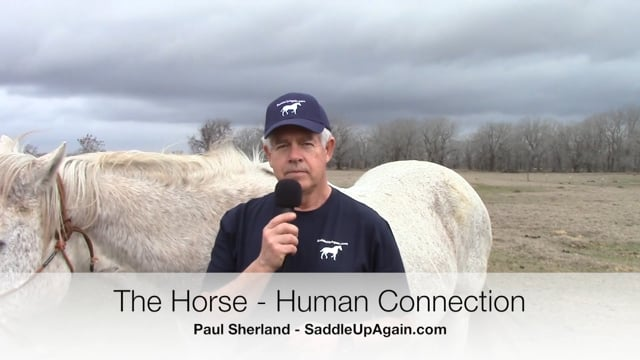 The Horse Human Connection - Does It Make a Difference in Your Training?