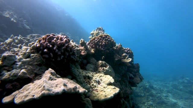 Rescuing Our Reefs