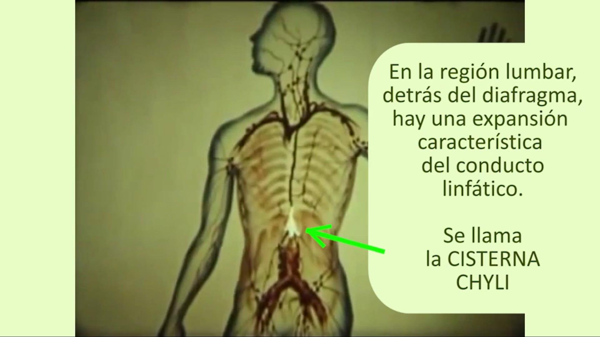yoga-detox-cisterna-chyli.mp4
