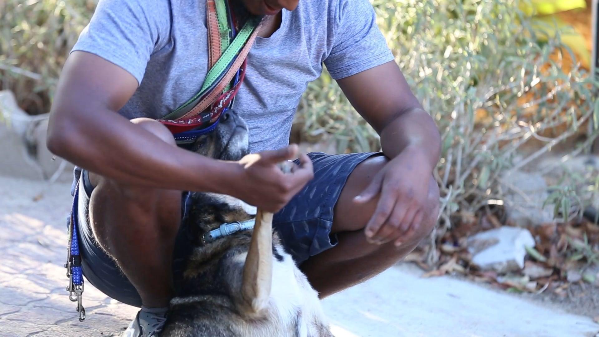 Flower Power Braktrap, Animal Welfare Society Stellenbosch - 25 February 2018