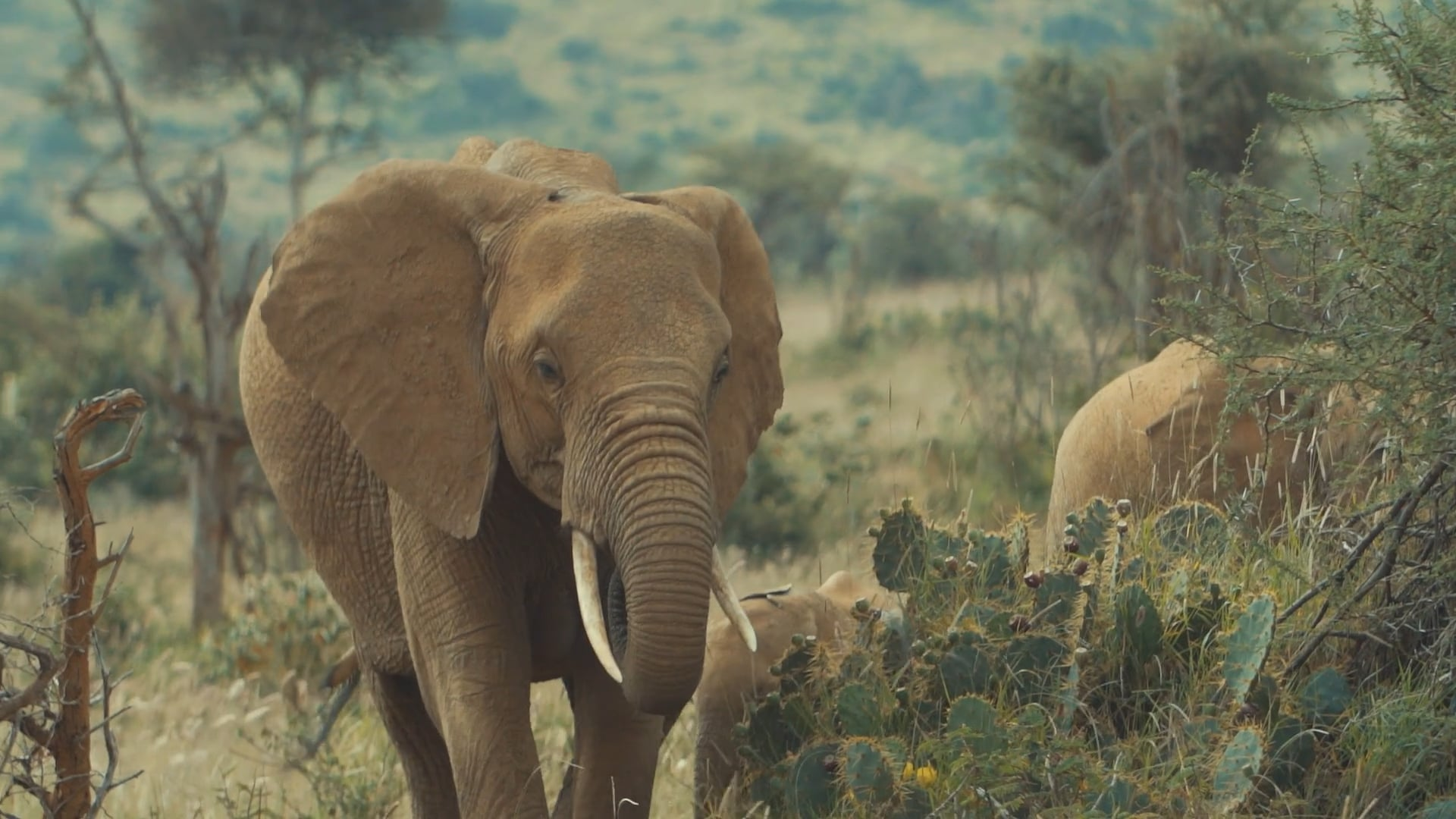 Space for Giants: Elephant Conservation Doc