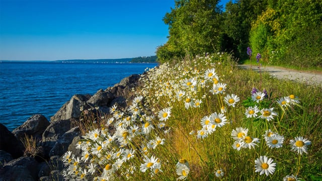 Discovery Park, Seattle-1