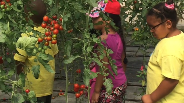 Grow Healthy! South Bronx School Gardens Fundraiser