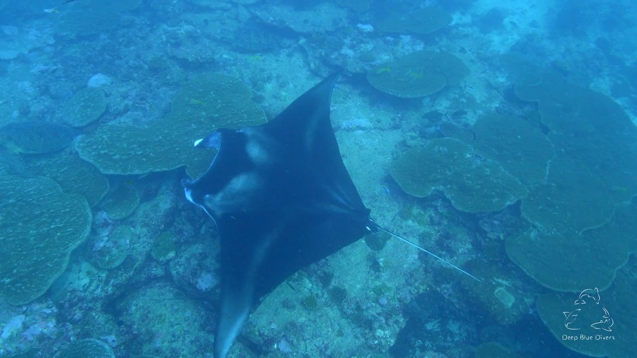 Deep Blue Divers   March Highlights 2018