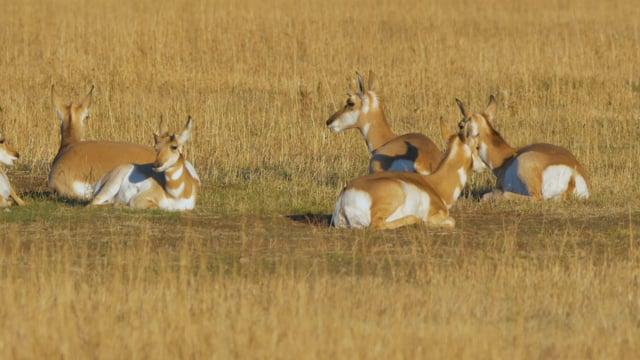 Wildlife in Grand Teton