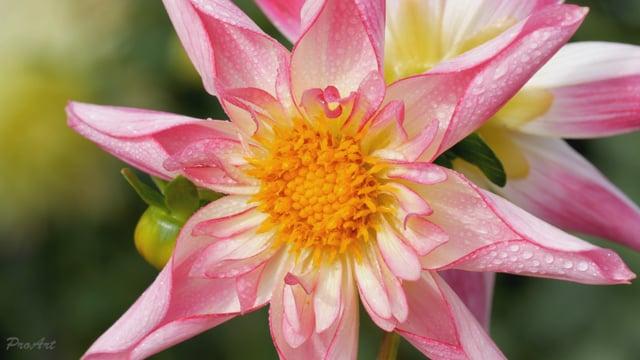 Macro Flowers-1