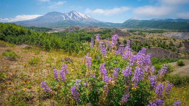 Hummocks Trail, Mt. St. Helens Area