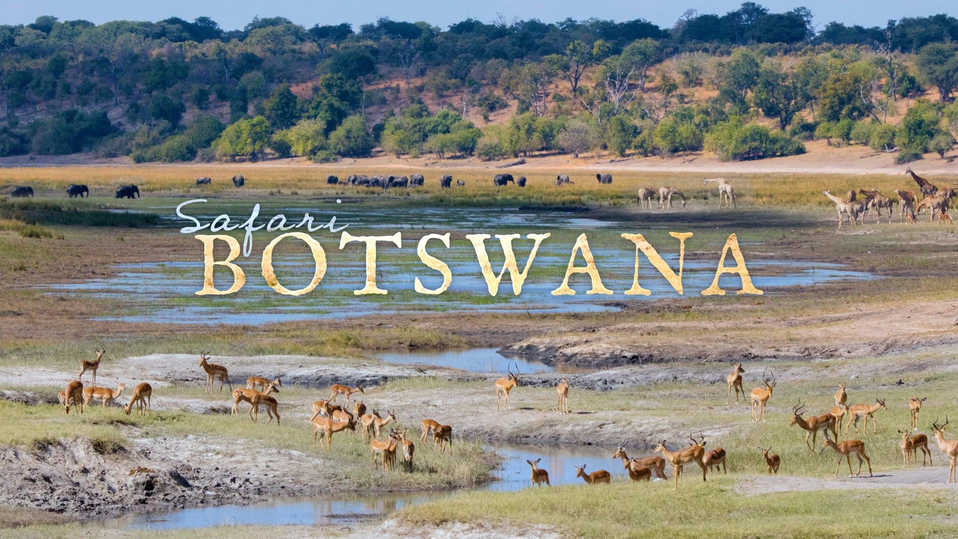 Safari Botswana   Time-Lapse Flow Motion - 4K