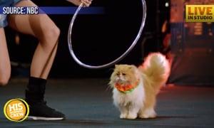 Cat Trainers WOW America's Got Talent Judges