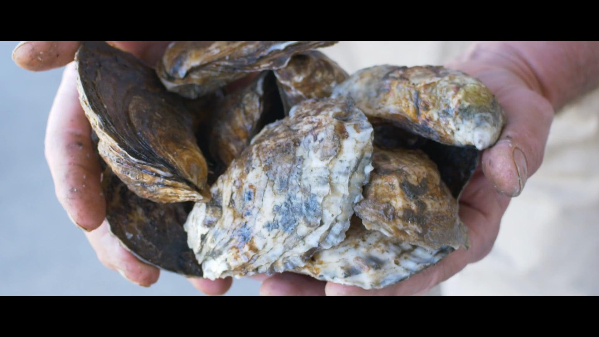 Briarpatch Shellfish Company