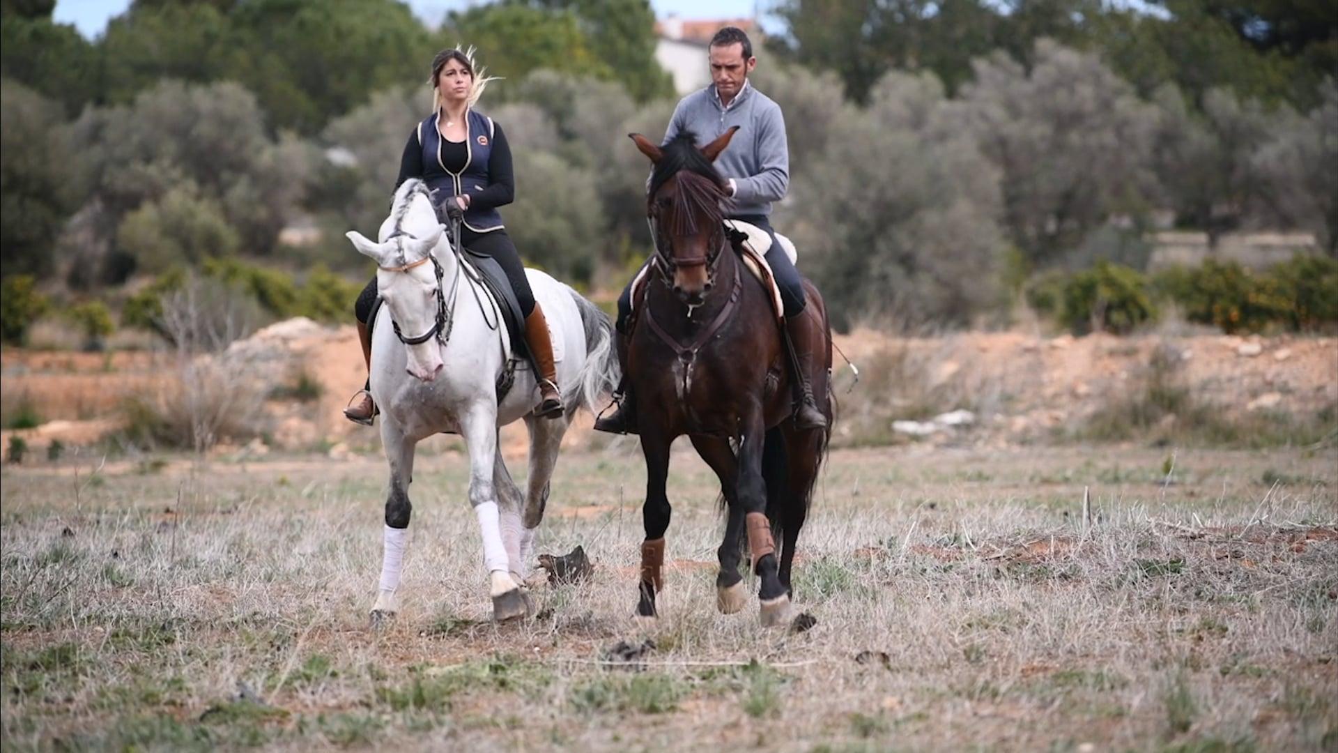 Majestic Horses Imagefilm 2018