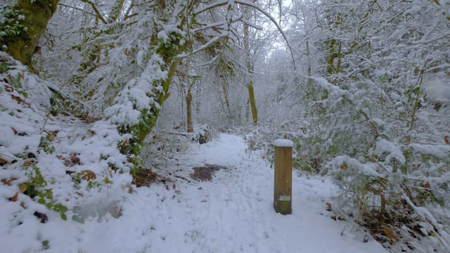 Walking in a Snow Forest