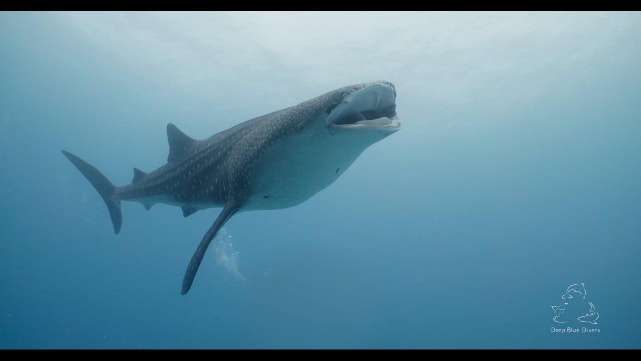 Deep Blue Divers   July Highlights 2018