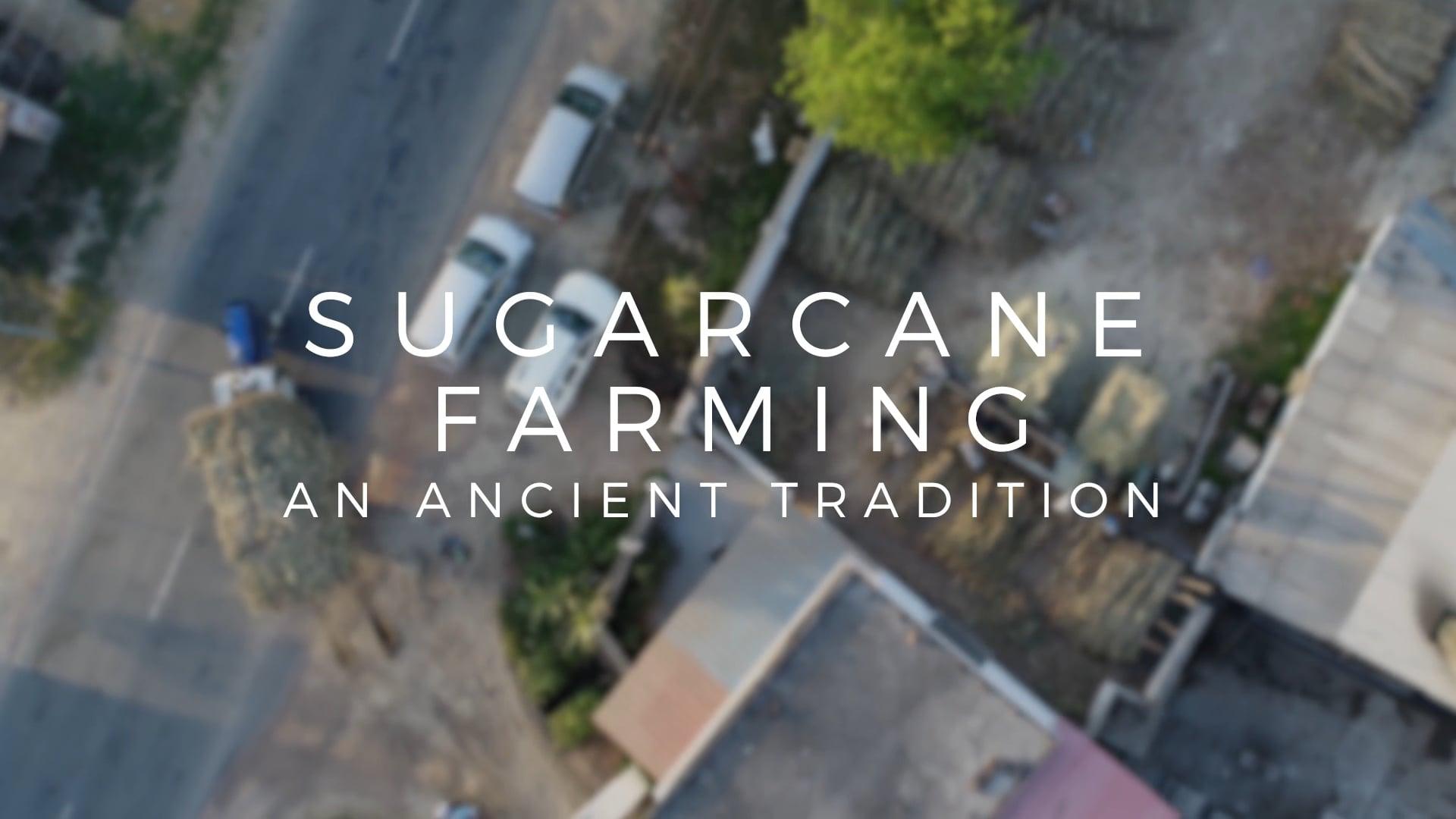 Heavenly Organics - Sugarcane Farming