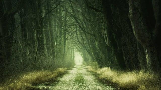 forest, grim, dark