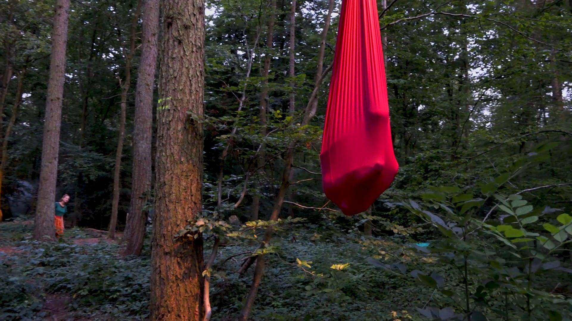 Teaser Zwischen Bäumen