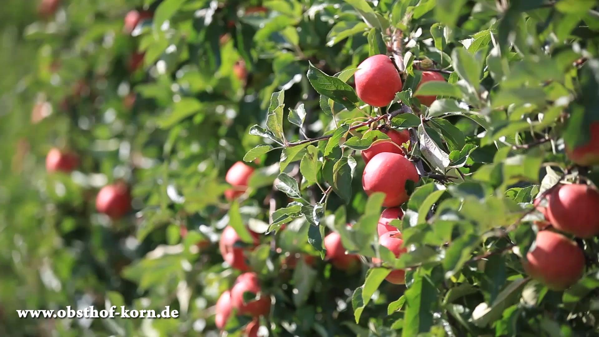Obsthof Korn - Das Beste aus der Natur