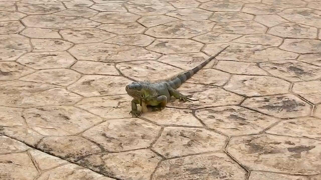 Caribbean Vacation in Dominican Republic Punta Cana - GoPro Hero 5