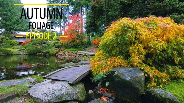 Autumn Foliage - 2