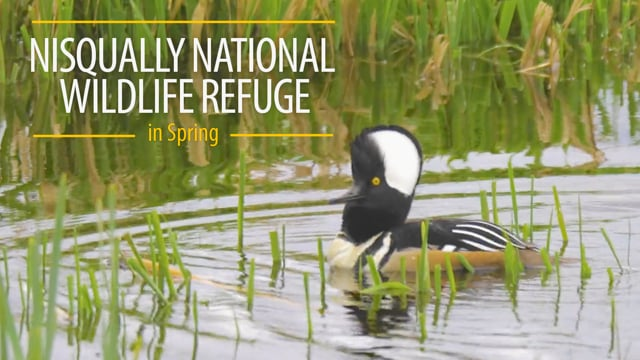 Nisqually National Wildlife Refuge in Spring 2