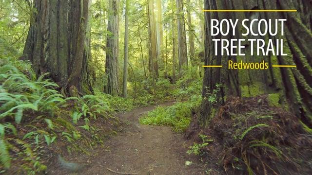 Boy Scout Tree Trail - Redwoods