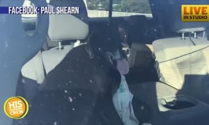 In the Dog House: Bacon Fat Causes Black Lab to Crash Car