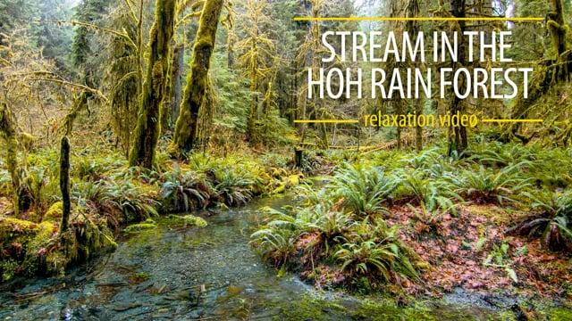 Stream in the Hoh Rain Forest