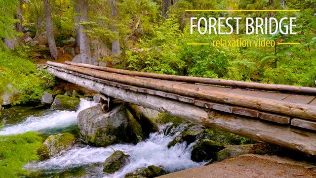 Forest Bridge - 4K HDR