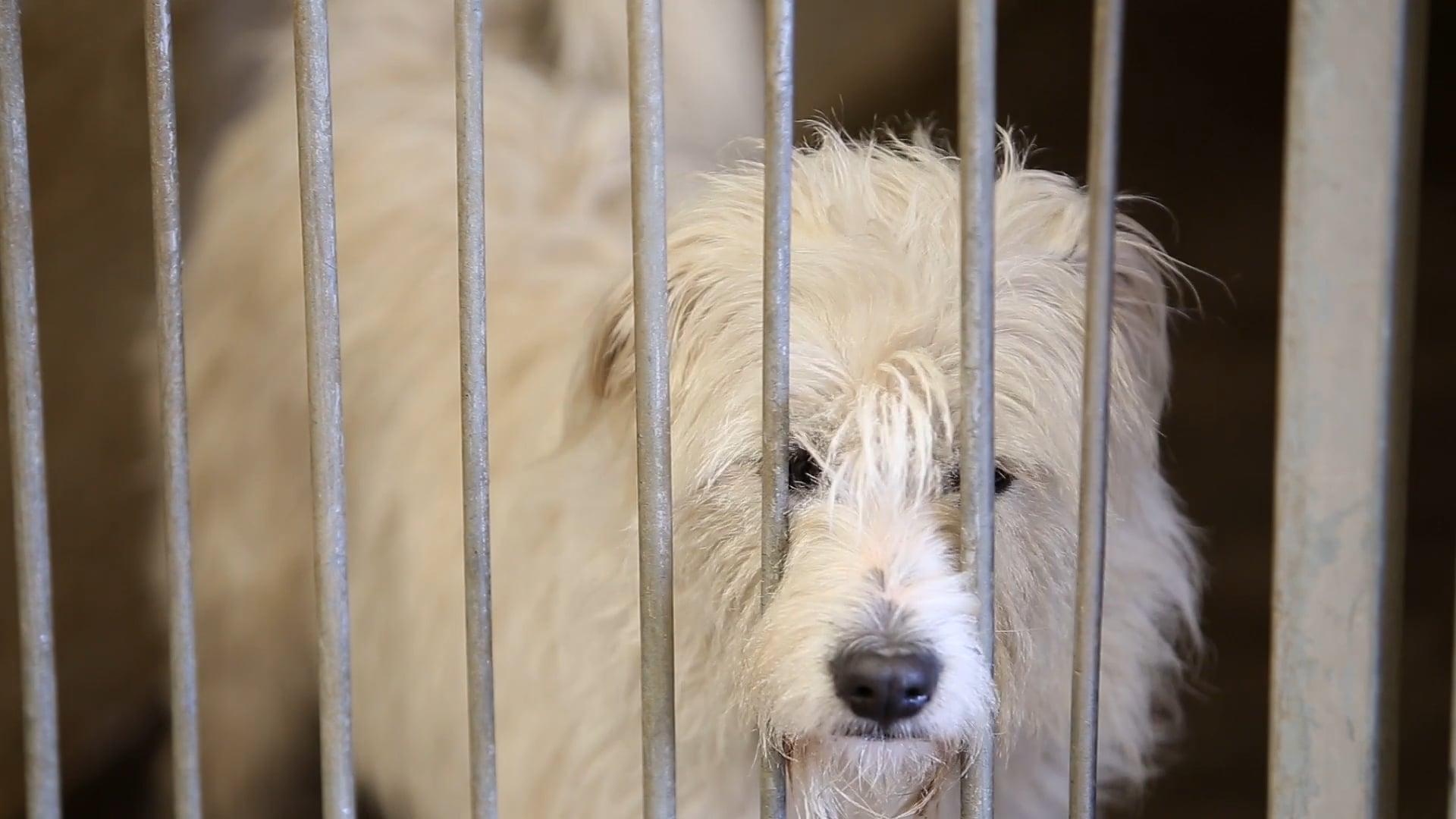 Animal Welfare Society Stellenbosch - Promo Video