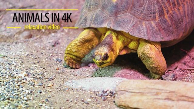 Animals in 4K
