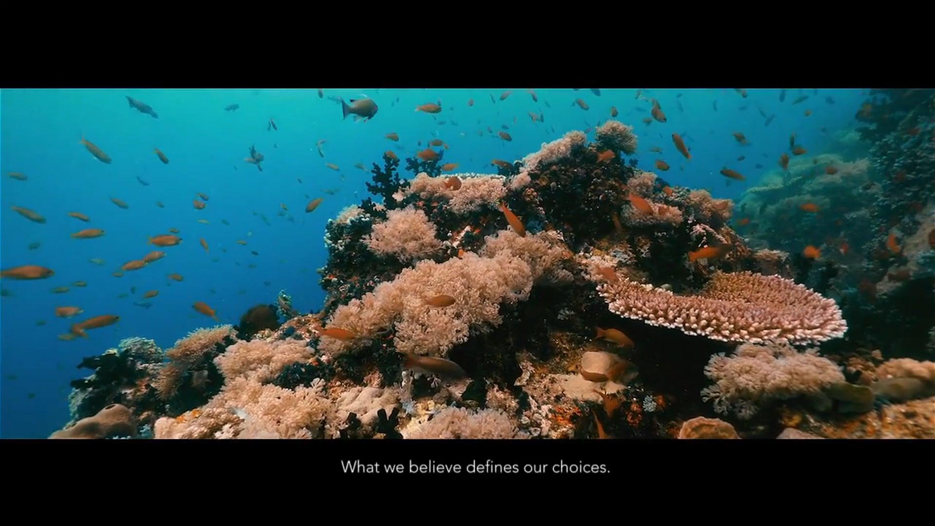 """HEALTHY OPTIONS - Believe """"Underwater"""""""