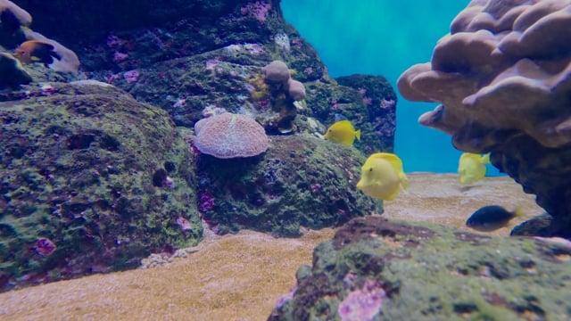 Waikiki Aquarium, Oahu, Hawaii