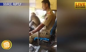 Bus Driver Suspended for Monkeying Around Behind Wheel