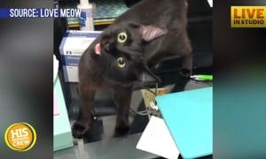 Cat Story: Kitten with Permanent Head Tilt Waiting for Family