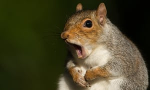 Driver Gives Squirrel CPR and It Works!