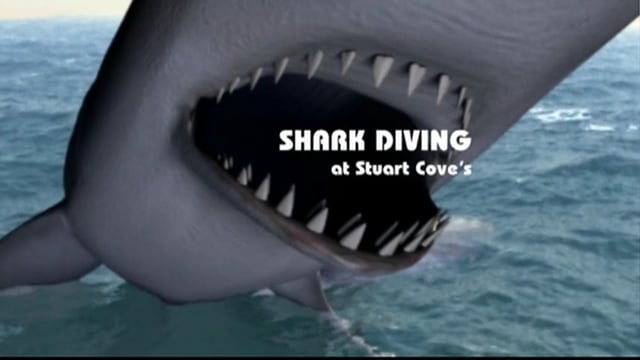 Introduction to Shark Diving