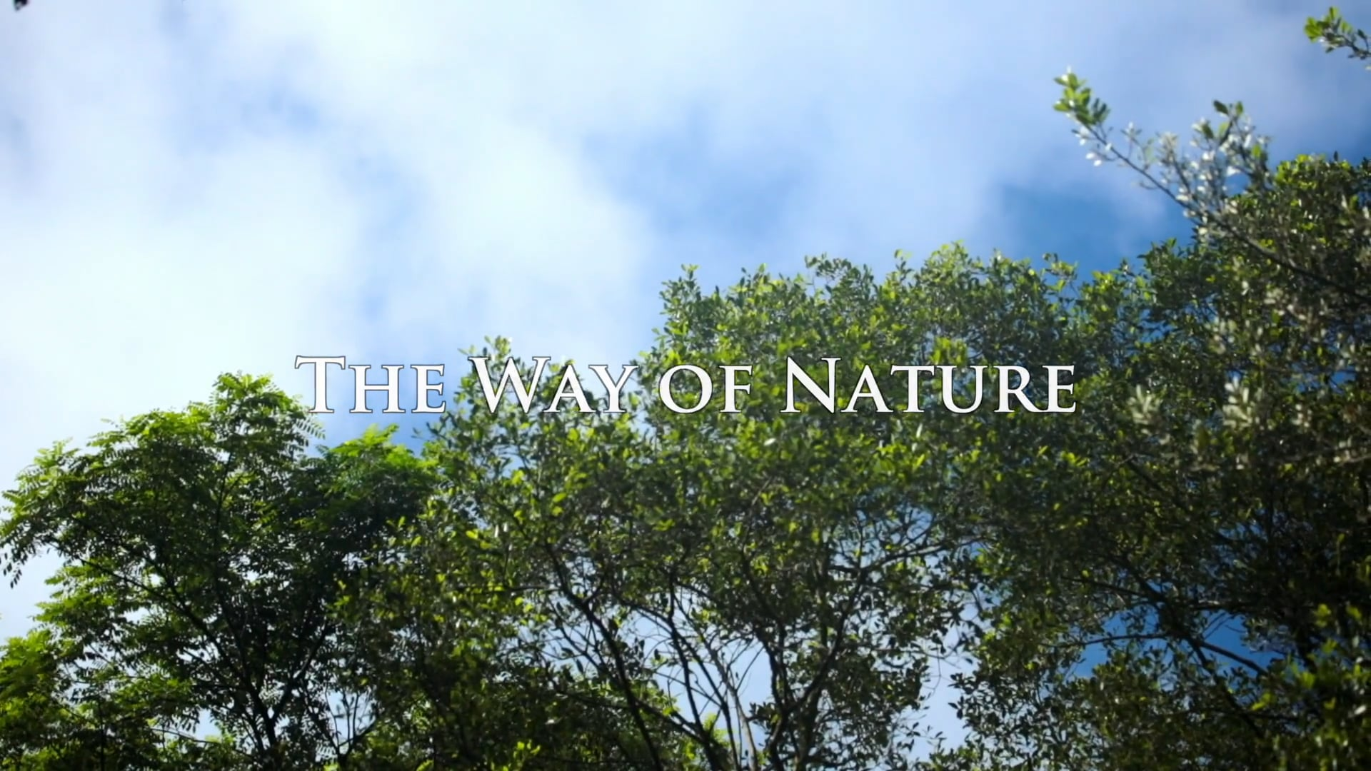 The Way of Nature - Promo