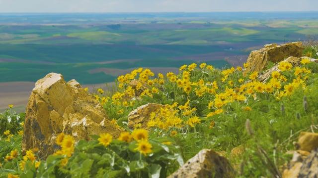 Steptoe Butte State Park, Spring Flowers