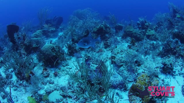 Stuart Cove - Reefs & Walls