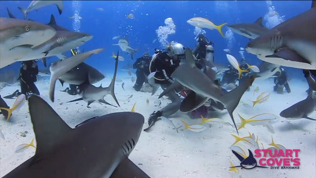Stuart Cove - Shark Feeds