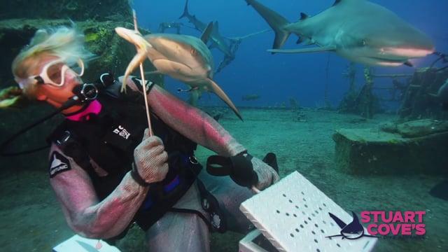Stuart Cove - Shark Myths