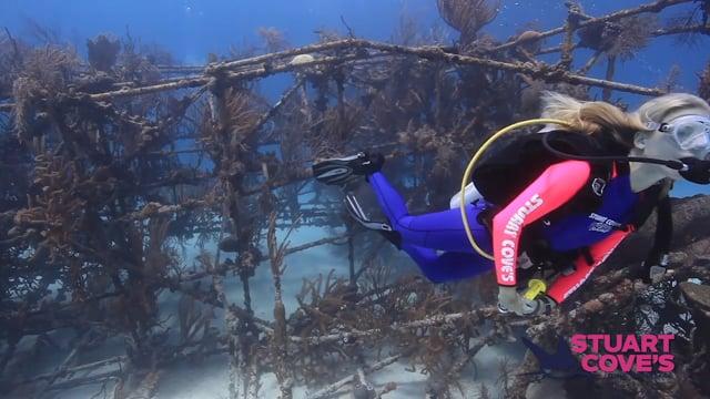 Stuart Cove - Underwater Hollywood