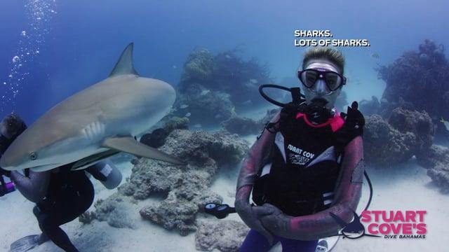 Stuart Cove - Blue Hole Shark-Feed
