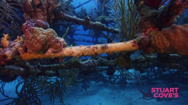 Stuart Cove - Bond Wrecks