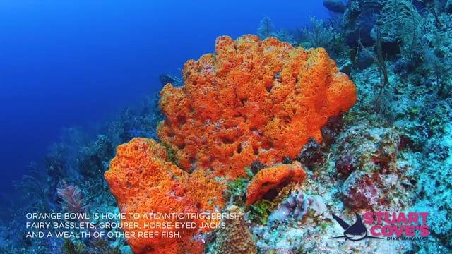 Stuart Cove - Orange Bowl
